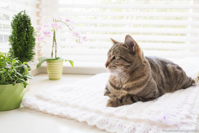 Cat on a Crochet Blanket