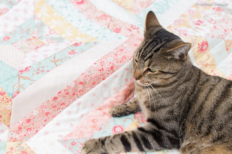 Cat on Quilt, Printemps Quilt, Three Sisters quilt, jelly roll quilt, quilt with jelly strips, precut fabrics quilt, floral quilt, feminine quilt, quilts for girls, pink quilt, vintage quilt, antique quilt, quilt as you go, shirtings fabric quilt, cats and quilts