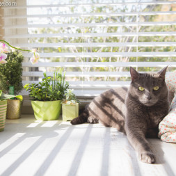 Dramatic Cat Photograph