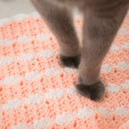 cat paws, cat peets, kitty feet, cats on blankets