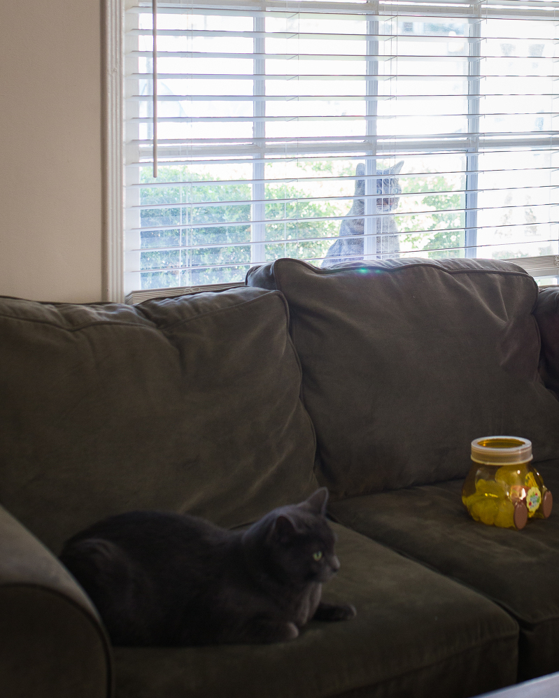 cat in the window, cats watching tv, cat on the couch, tabby and korat cats