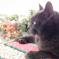 happy caturday, cats on quilts, cats and quilting, cats and sewing, kitty quilter
