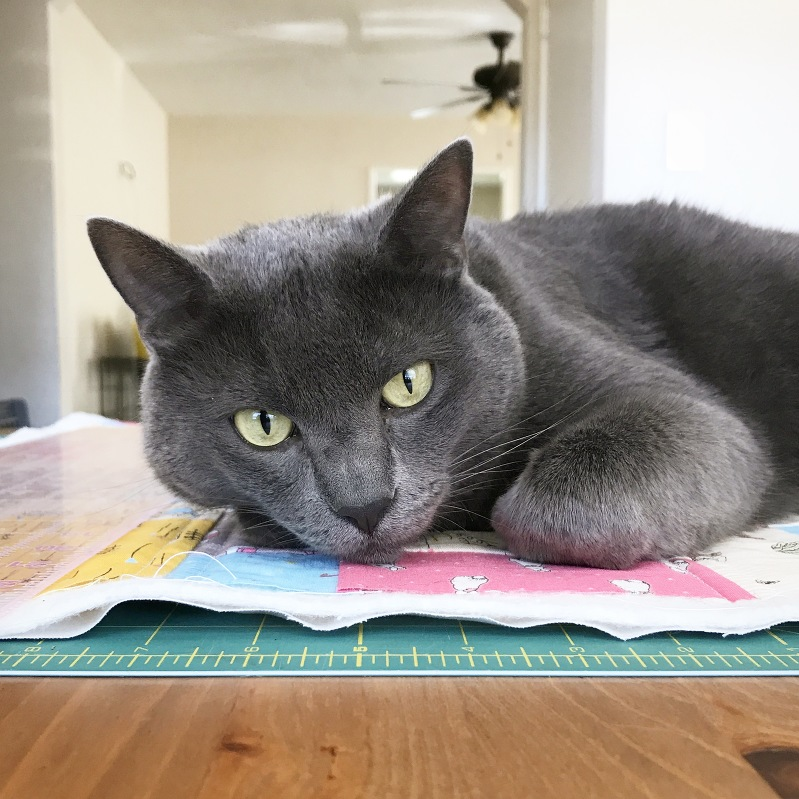 cats and quilting, cats on quilts, sewing with cats, korat kat, russian blue, peter rabbit fabric