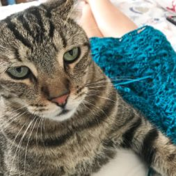 Cat + Yarn, Cat on Lap, Cat and Crochet