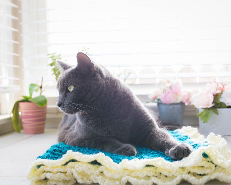 Cat on Crochet Blanket